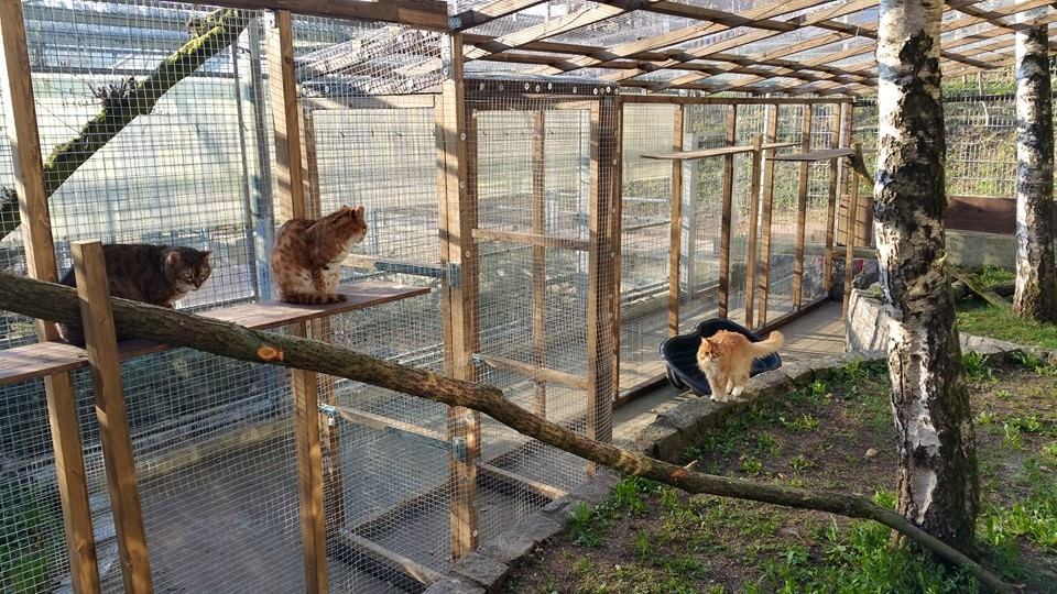 Bengalkatzen im Freigehege