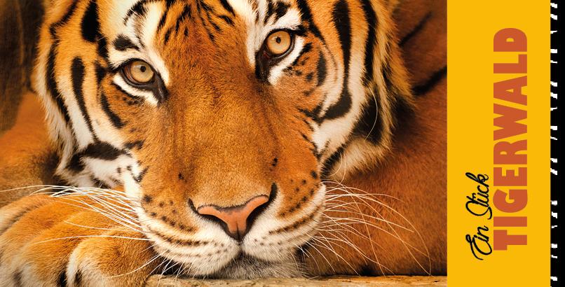 Geschenkzertifikat-Tigerwald-1